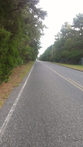 A lovely road to cycle down in South Jersey